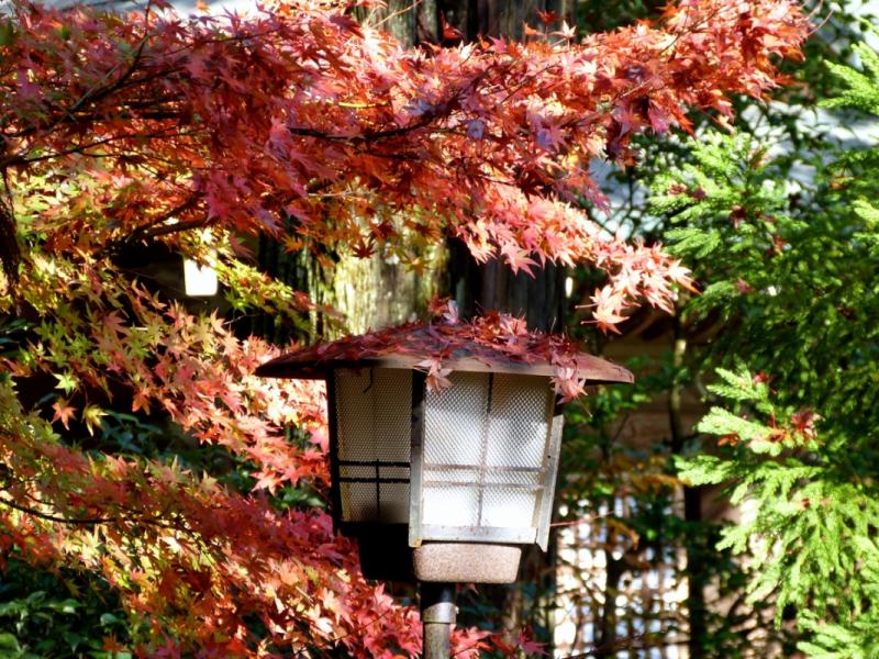 Autumn Leaves at Mitaki Temple - 08