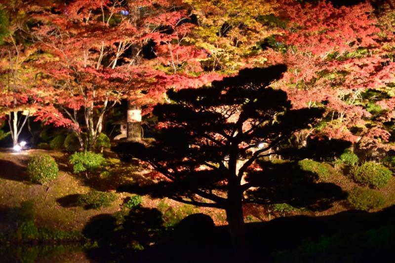 Autumn Illuminations at Shukkeien Garden - 5