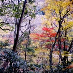 Sandankyo in Autumn - 14 of 15