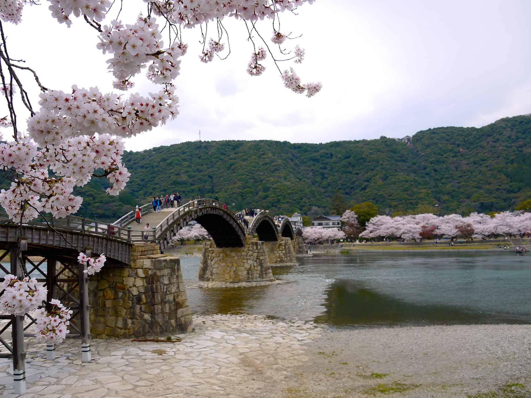 kintai bridge cherry blossom
